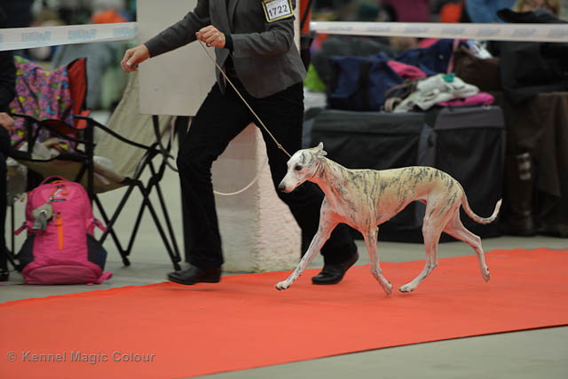 Turku Winther Dog Show
